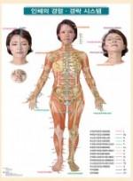 인체의 경혈경락 시스템
