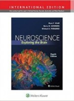 Neuroscience:Exploring the Brain,4/e(IE)